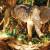 Rainforest Cafe image 3 - MICE UK